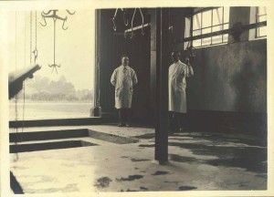 Slachthuis 5